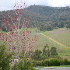 vineyard-debortoli-yarra-valley-winery